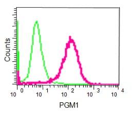 Flow Cytometry - Anti-PGM1 antibody [EPR15240] (ab188869)