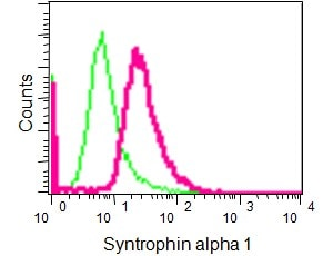 Flow Cytometry - Anti-Syntrophin alpha 1 antibody [EPR14828] (ab188873)