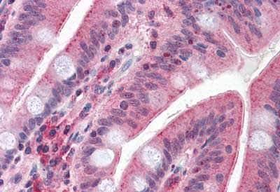 Immunohistochemistry (Formalin/PFA-fixed paraffin-embedded sections) - Anti-MUPCDH antibody - Cytoplasmic domain (ab189111)