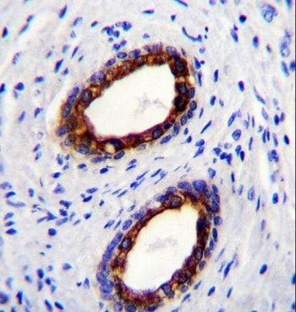 Immunohistochemistry (Formalin/PFA-fixed paraffin-embedded sections) - Anti-Cytokeratin 18 antibody - C-terminal (ab189444)