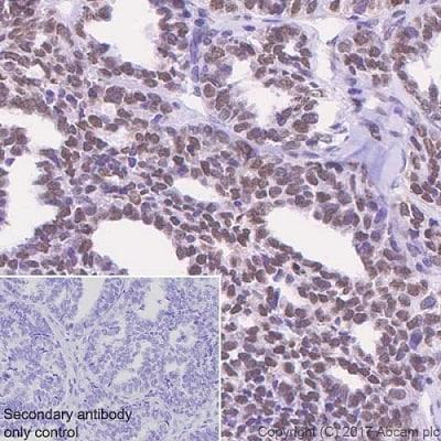 Immunohistochemistry (Formalin/PFA-fixed paraffin-embedded sections) - Anti-APE1 antibody [EPR18378-45] (ab189474)