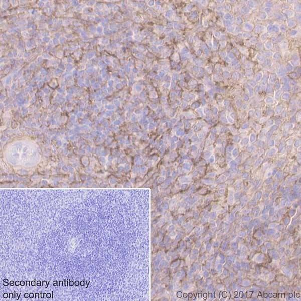 Immunohistochemistry (Formalin/PFA-fixed paraffin-embedded sections) - Anti-CD44 antibody [EPR18668] (ab189524)