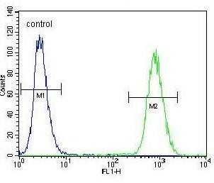 Flow Cytometry - Anti-FGF11 antibody - N-terminal (ab190115)