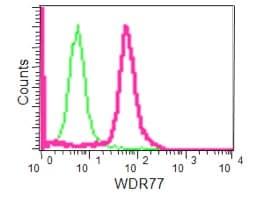 Flow Cytometry - Anti-WDR77 antibody [EPR10709(2)] - C-terminal (ab190361)