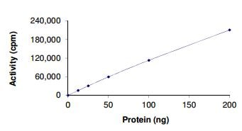 Functional Studies - Recombinant human Ret (mutated S891 A) protein (ab190381)