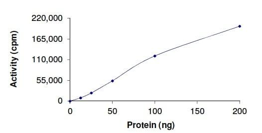 Functional Studies - Recombinant human MAK protein (ab190407)