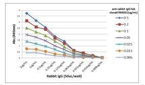 ELISA - Anti-Rabbit IgG Fab region antibody [RMG01] (ab190495)