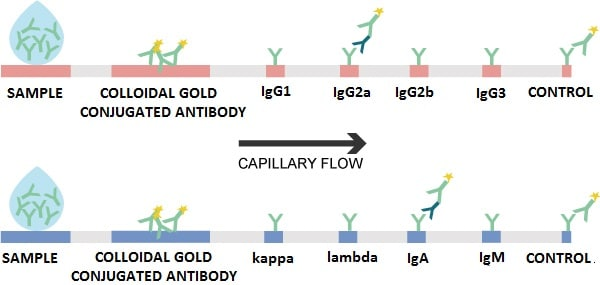 Lateral Flow assay summary