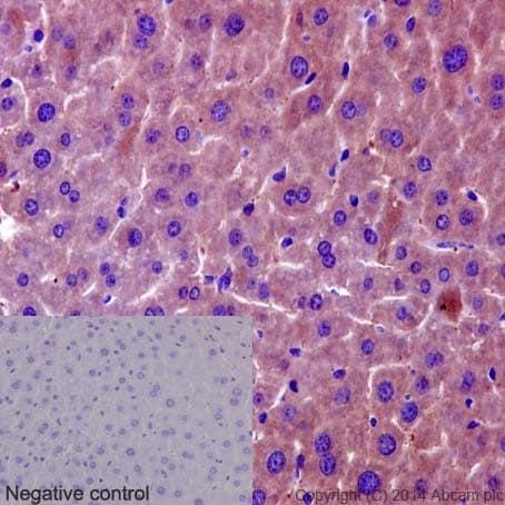 Immunohistochemistry (Formalin/PFA-fixed paraffin-embedded sections) - Anti-TMEM43 antibody [EPR15379] (ab190793)