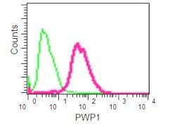 Flow Cytometry (Intracellular) - Anti-PWP1 antibody [EPR16130] (ab190794)