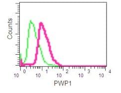 Flow Cytometry - Anti-PWP1 antibody [EPR16131] - C-terminal (ab190795)