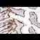 Immunohistochemistry (Formalin/PFA-fixed paraffin-embedded sections) - Anti-CTBP2 antibody - C-terminal (ab190933)