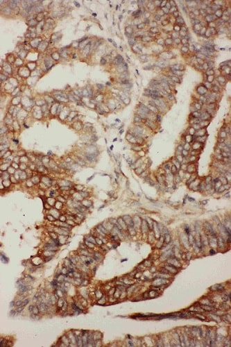 Immunohistochemistry (Formalin/PFA-fixed paraffin-embedded sections) - Anti-Bcl2L2 antibody (ab190952)