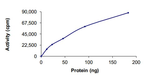 Functional Studies - Recombinant human CSNK1A1L protein (ab191034)