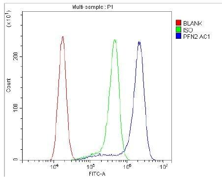 Flow Cytometry - Anti-Profilin 2 antibody - C-terminal (ab191054)