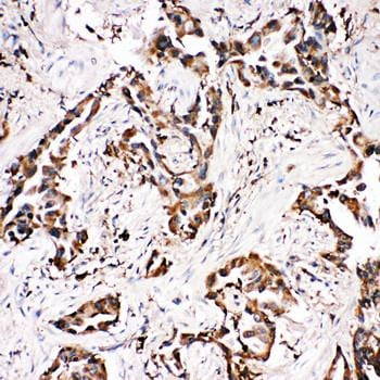 Immunohistochemistry (Formalin/PFA-fixed paraffin-embedded sections) - Anti-APLP1 antibody - N-terminal (ab191066)