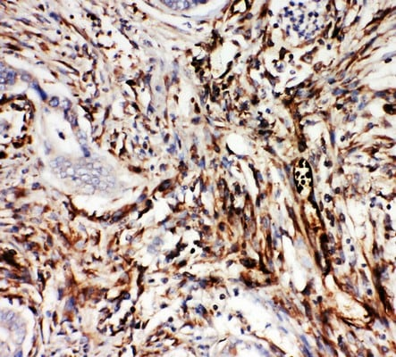 Immunohistochemistry (Formalin/PFA-fixed paraffin-embedded sections) - Anti-NRG1 antibody - C-terminal (ab191139)