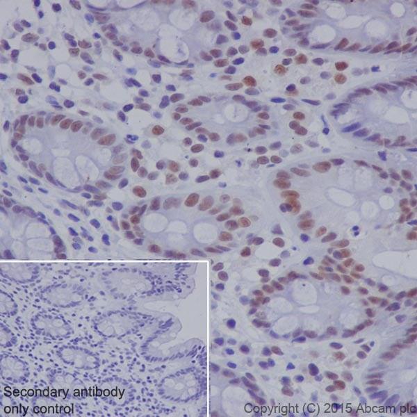 Immunohistochemistry (Formalin/PFA-fixed paraffin-embedded sections) - Anti-RNF40 antibody [EPR18511] (ab191309)
