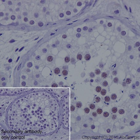 Immunohistochemistry (Formalin/PFA-fixed paraffin-embedded sections) - Anti-KDM3A / JHDM2A antibody [EPR18875] (ab191389)
