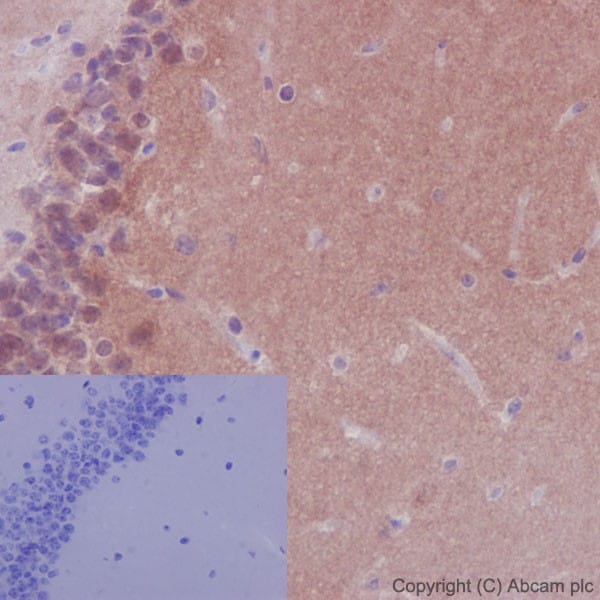 Immunohistochemistry (Formalin/PFA-fixed paraffin-embedded sections) - Anti-NTH1 antibody [EPR15930] (ab191413)