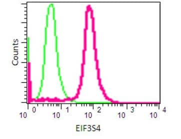 Flow Cytometry - Anti-eIF3g antibody [EPR16146] - N-terminal (ab191422)