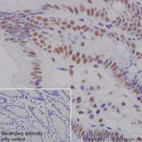 Immunohistochemistry (Formalin/PFA-fixed paraffin-embedded sections) - Anti-KDM4B / JMJD2B antibody [EPR18603] (ab191434)