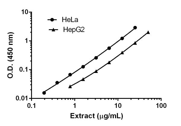 Titration of HeLa and HepG2 extracts within the working range of the assay.