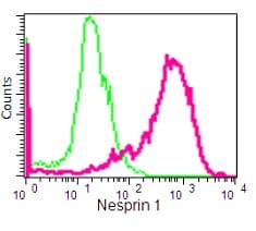 Flow Cytometry - Anti-Nesprin1/Syne-1 antibody [EPR14196] (ab192234)