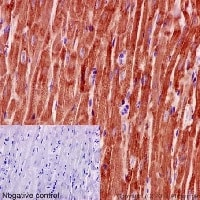 Immunohistochemistry (Formalin/PFA-fixed paraffin-embedded sections) - Anti-MGST3 antibody [EPR12352] (ab192254)