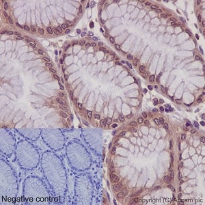 Immunohistochemistry (Formalin/PFA-fixed paraffin-embedded sections) - Anti-RPLP0 antibody [EP15646] (ab192866)