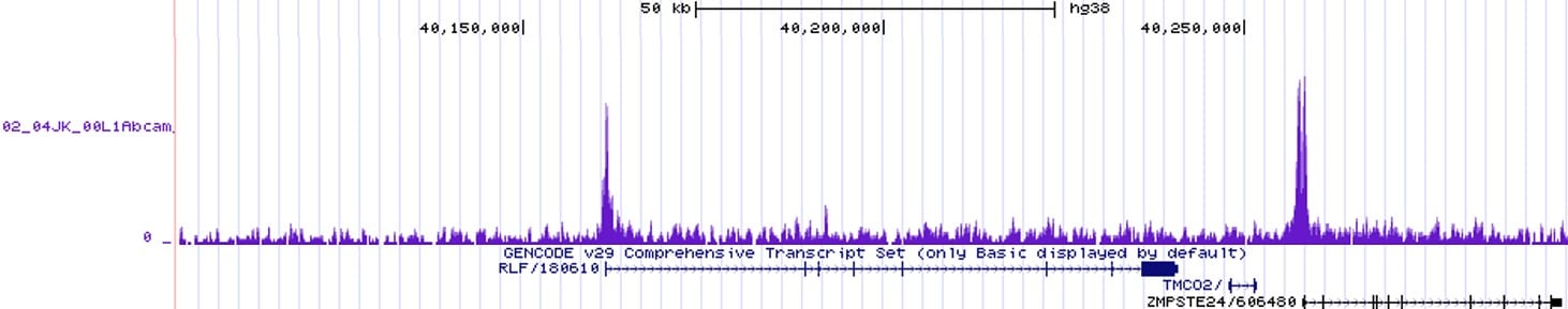 CHIPseq - Anti-Histone H3 (tri methyl K27) antibody [EPR18607] - ChIP Grade (ab192985)
