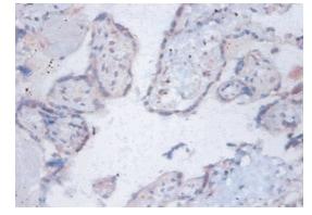Immunohistochemistry (Formalin/PFA-fixed paraffin-embedded sections) - Anti-C14orf2 antibody (ab193132)