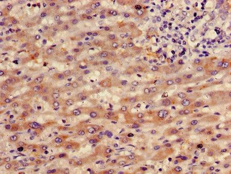 Immunohistochemistry (Formalin/PFA-fixed paraffin-embedded sections) - Biotin Anti-RBP4 antibody (ab193151)