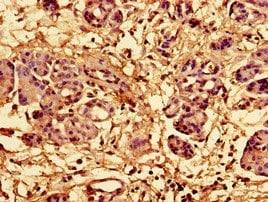 Immunohistochemistry (Formalin/PFA-fixed paraffin-embedded sections) - Anti-RPL28 antibody (ab193164)