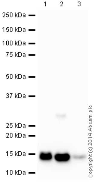 Western blot - Anti-Cytochrome C antibody [EPR1327] (HRP) (ab193239)