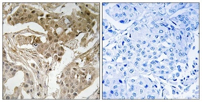 Immunohistochemistry (Formalin/PFA-fixed paraffin-embedded sections) - Anti-c-Fos (phospho T232) antibody (ab193365)