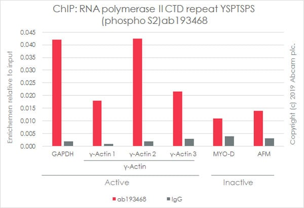 ChIP - Anti-RNA polymerase II CTD repeat YSPTSPS (phospho S2) antibody [EPR18855] (ab193468)