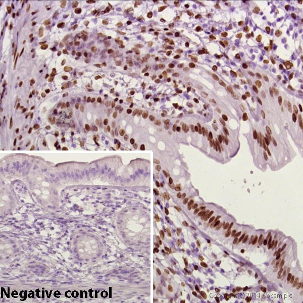 Immunohistochemistry (Formalin/PFA-fixed paraffin-embedded sections) - Anti-Mouse IgG1 VHH Single Domain (HRP) (isotype specific) (ab193651)