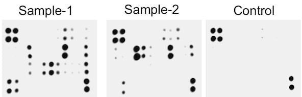 Typical images obtained with Abcam Mouse Cytokine Antibody Array - Membrane (144 Targets) ab193660.
