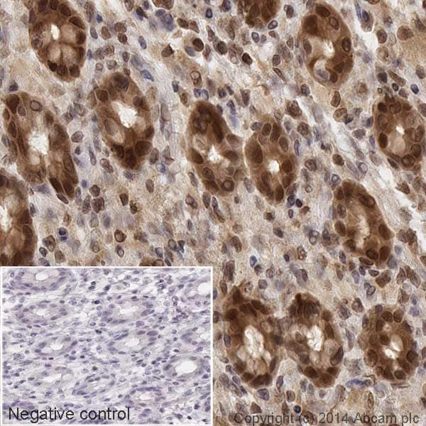Immunohistochemistry (Formalin/PFA-fixed paraffin-embedded sections) - Anti-MEK1 antibody [E342] (HRP) (ab193987)