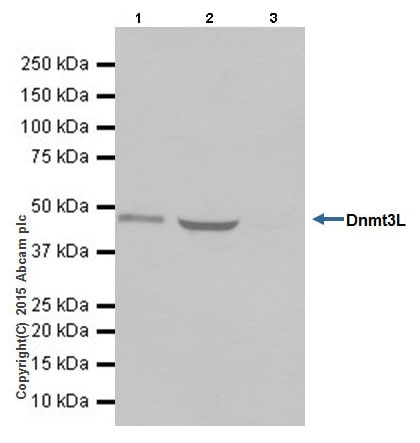 Immunoprecipitation - Anti-Dnmt3L antibody [EPR18774] (ab194094)