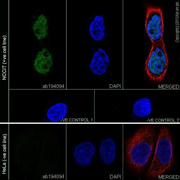 Immunocytochemistry/ Immunofluorescence - Anti-Dnmt3L antibody [EPR18774] (ab194094)
