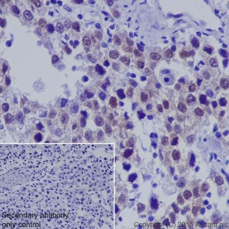 Immunohistochemistry (Formalin/PFA-fixed paraffin-embedded sections) - Anti-Dnmt3L antibody [EPR18774] (ab194094)