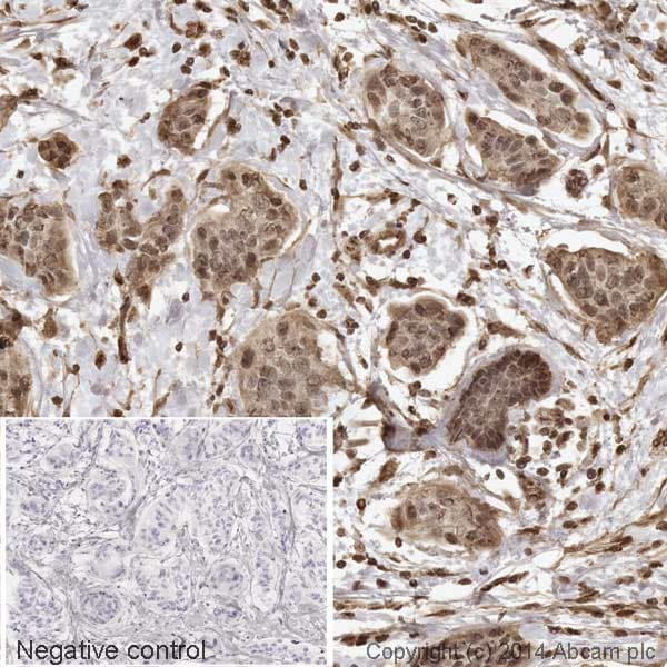Immunohistochemistry (Formalin/PFA-fixed paraffin-embedded sections) - Anti-AKT1 (phospho S473) antibody [EP2109Y] (HRP) (ab194201)