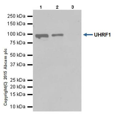 Immunoprecipitation - Anti-UHRF1 antibody [EPR18803] (ab194236)