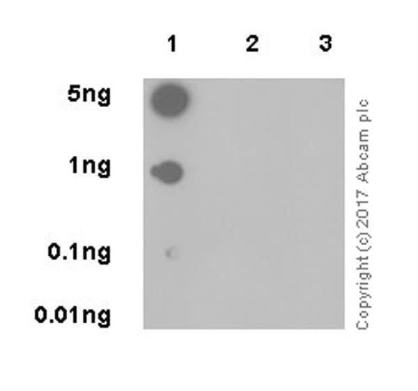 Dot Blot - Anti-Histone H3 (ubiquityl K23) antibody [EPR18876] (ab194243)