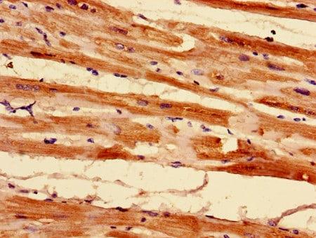 Immunohistochemistry (Formalin/PFA-fixed paraffin-embedded sections) - Anti-MRPL55 antibody (ab194283)
