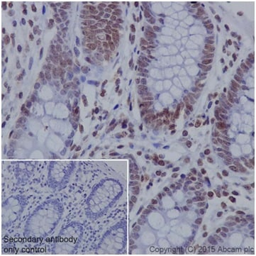 Immunohistochemistry (Formalin/PFA-fixed paraffin-embedded sections) - Anti-C14orf169 / NO66 antibody [EPR18754] (ab194292)