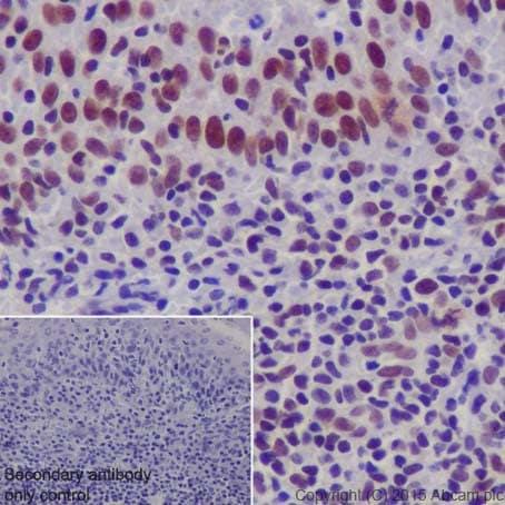 Immunohistochemistry (Formalin/PFA-fixed paraffin-embedded sections) - Anti-EHMT2/G9A + EHMT1/GLP antibody [EPR18667] (ab194299)
