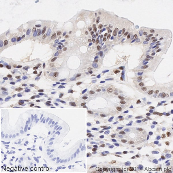 Immunohistochemistry (Formalin/PFA-fixed paraffin-embedded sections) - Anti-CREB antibody [E306] (HRP) (ab194313)